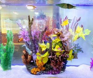 alpine aquarium